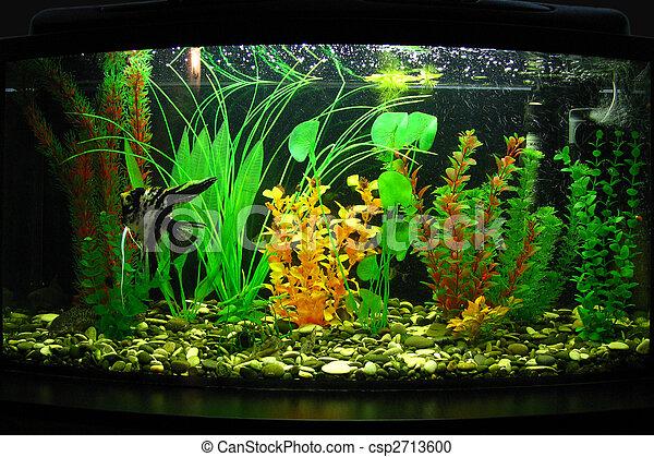 Aquarium - csp2713600