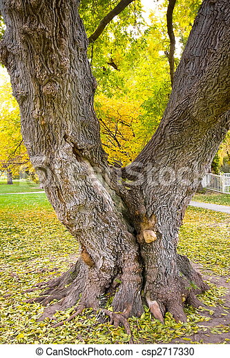 Autumn - Fall Background with fallen leaves - csp2717330