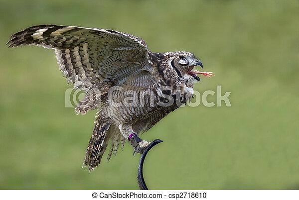 Bird of prey - csp2718610