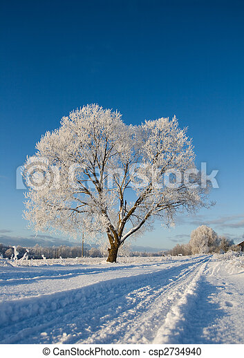 Frost covered tree - csp2734940
