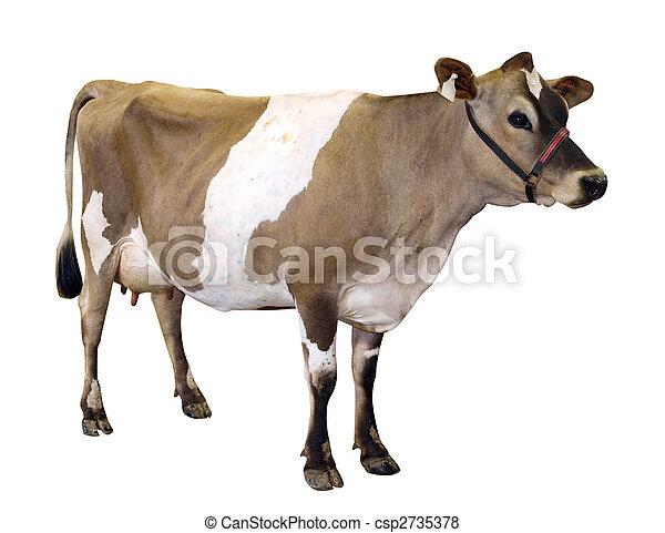 Уздечка корове