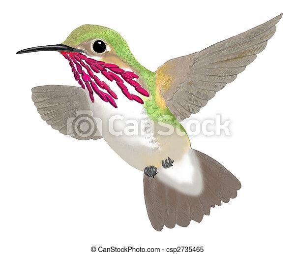 Calliope Hummingbird - csp2735465