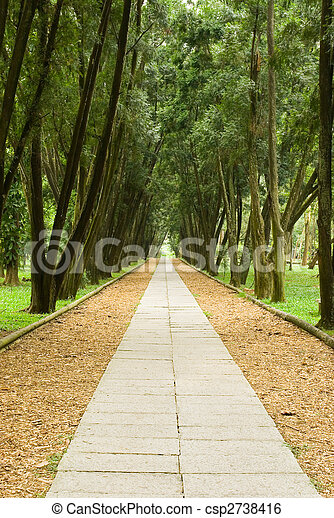 stone path and tranquail pine woods. - csp2738416