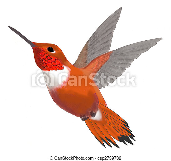 Rufous hummingbird drawing - photo#35