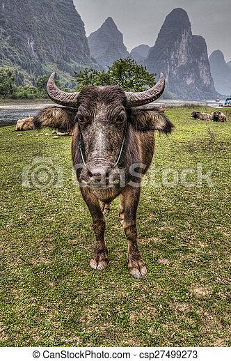 Herd of cattle grazing on pasture