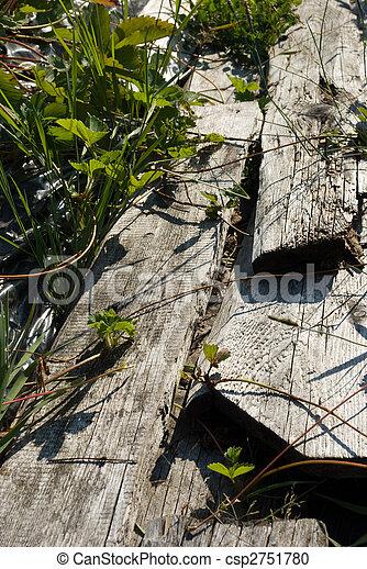 植物, 板, いちご, によって, 成長する, 草 - csp2751780