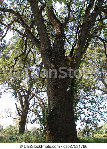 image de majestueux arbre a beau majestueux arbre csp27531766 recherchez des. Black Bedroom Furniture Sets. Home Design Ideas