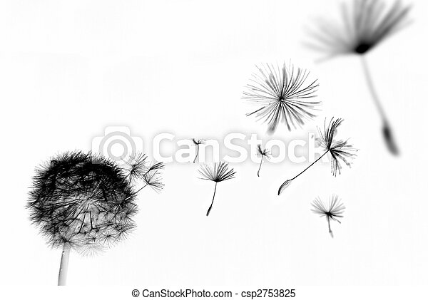 Abstract dandelion - csp2753825