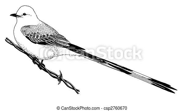 Scissor-tailed, タイランチョウ上 ...