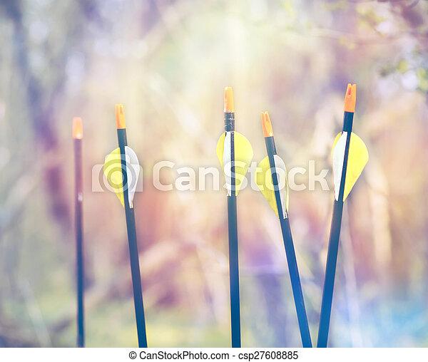 Bow Arrows Sport archery