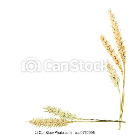Wheat ears border - csp2762996