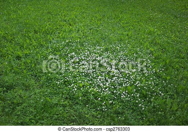Photos de tr fle blanc fleurs vert pelouse blanc for Pelouse tarif