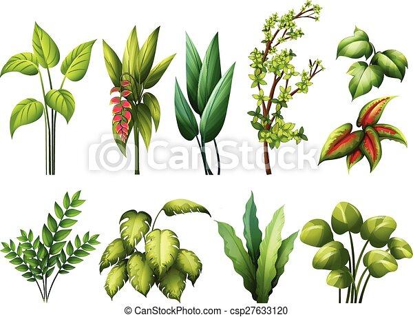 Ilustraciones de vectores de plantas different clase for Diferentes plantas ornamentales