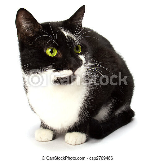 cat isolated on white background - csp2769486