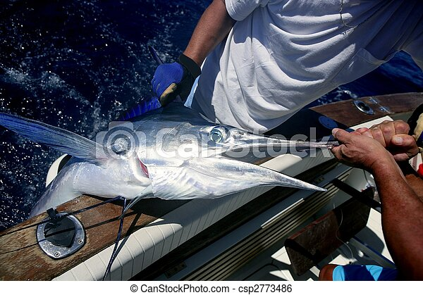 Billfish white Marlin catch and release on boat - csp2773486