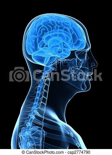 human brain parts - csp2774790
