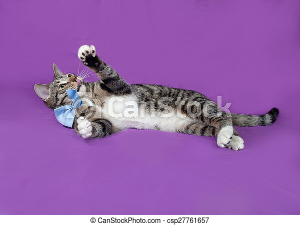 Tabby and white cat in bow tie playing on lilac
