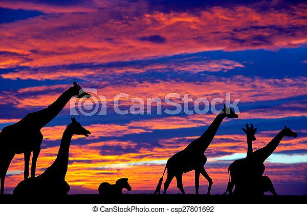 zebra and giraffes resting in the sunset