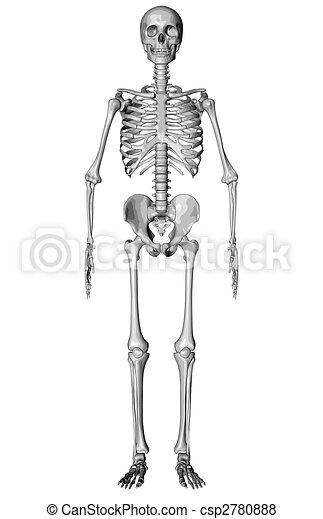 Skeleton - Sketch - csp2780888
