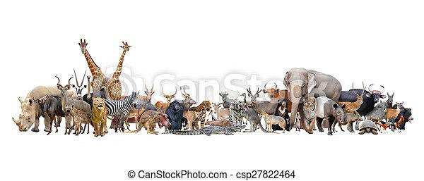 世界, 動物 - csp27822464