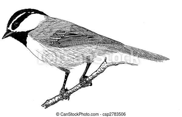 Mountain Chickadee - csp2783506
