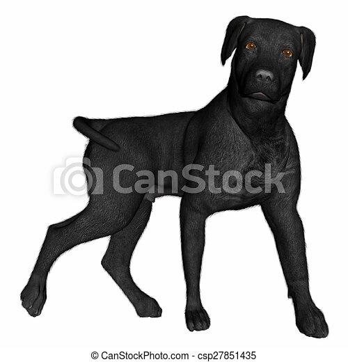 Dessins de debout, labrador, render, -, chien, noir, 3d