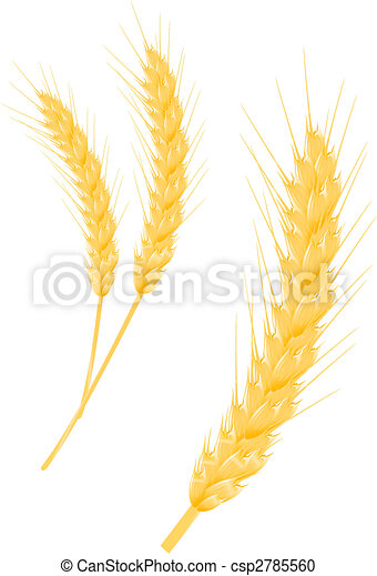 Wheat ear - csp2785560