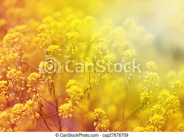 beautiful flowers   - csp27876709