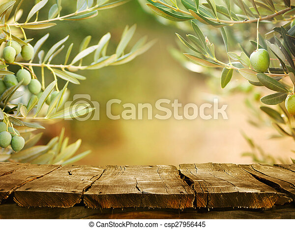 Olive trees with tabletop