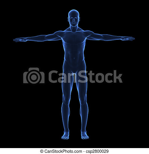 X ray human body - csp2800029