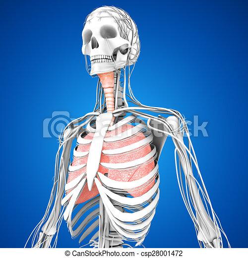breathing clip art