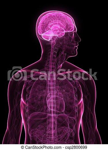 human brain parts - csp2800699