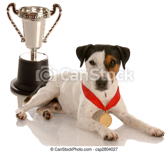 champion dog - jack russel terrier wearing gold medal sitting with trophy - csp2804027