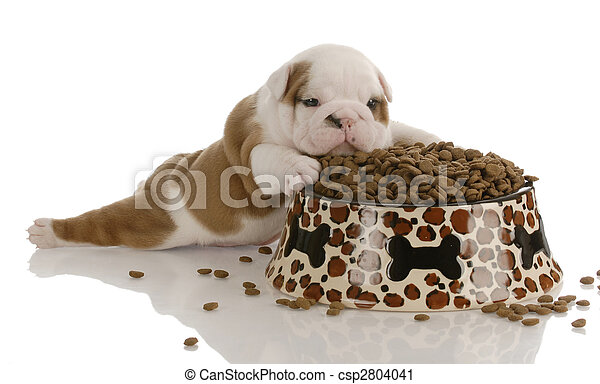 small bulldog puppy laying beside large bowl of dog food - csp2804041