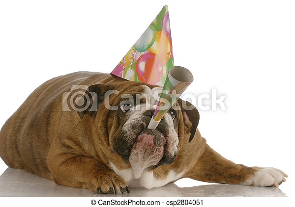 english bulldog birthday dog wearing hat and blowing on horn - csp2804051
