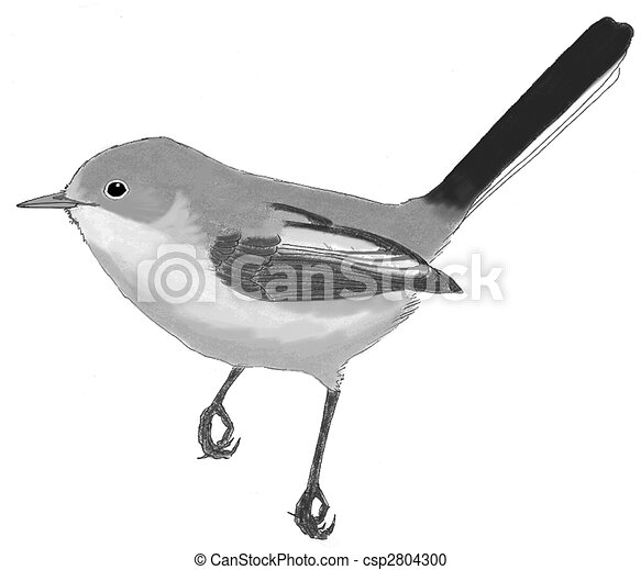 Blue-gray Gnatcatcher - csp2804300