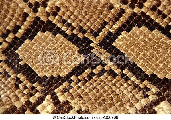 Background snake skin pattern brown - csp2806966