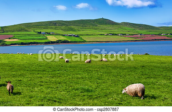 sheep in rural landscape for farming - csp2807887