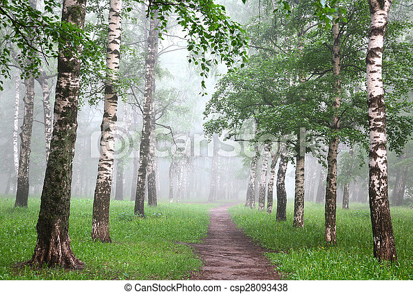 Early morning in mist birch grove - csp28093438