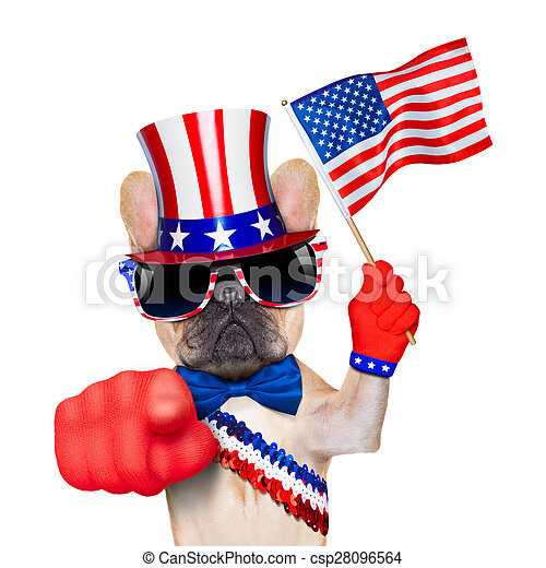 french bulldog waving a flag of usa on independence day on 4th of july, while pointing at you with finger, isolated on white background