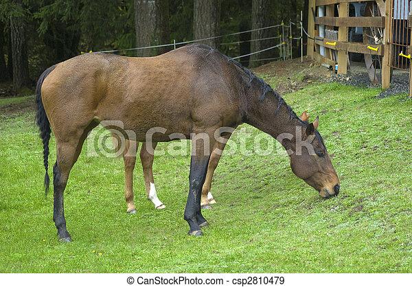 Stock Fotografien von pferden, gras, essende - a, Pferd