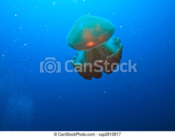 Box jelly fish on Great Barrier Reef Australia - csp2810817