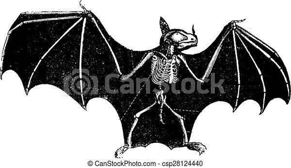 vecteur eps de vendange  chauve souris  squelette halloween bats clip art free halloween bats clip art free