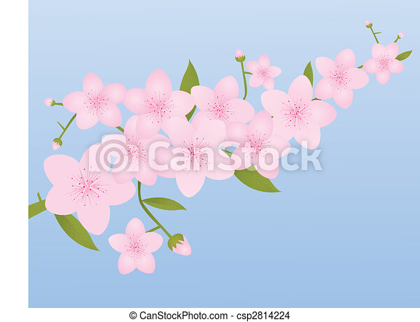 Pink Cherry Blossoms - csp2814224