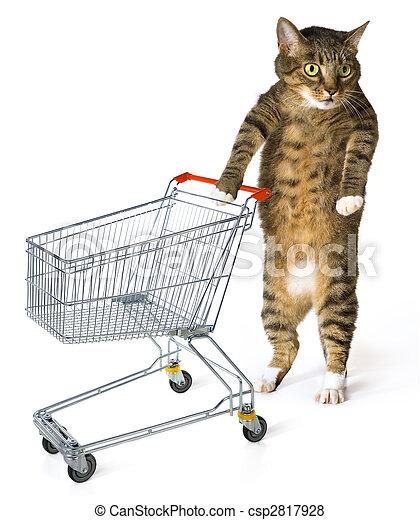 consumer cat - csp2817928
