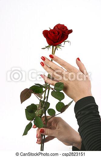 valentine\'s, jour - csp2823151