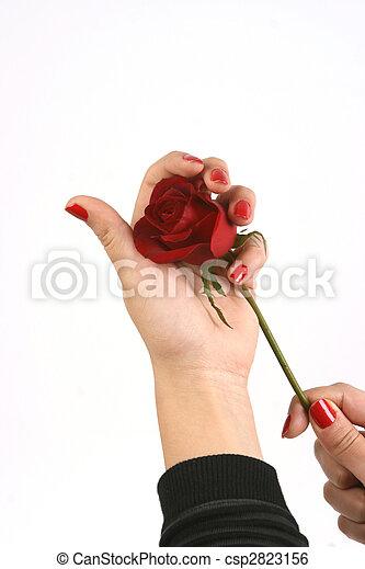 valentine\'s, jour - csp2823156