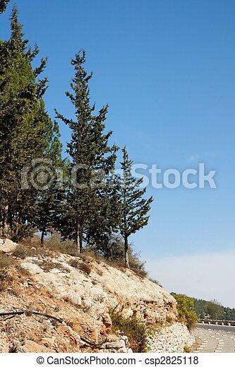 ciprestes, rochoso, colina, Jerusalém, montanhas - csp2825118
