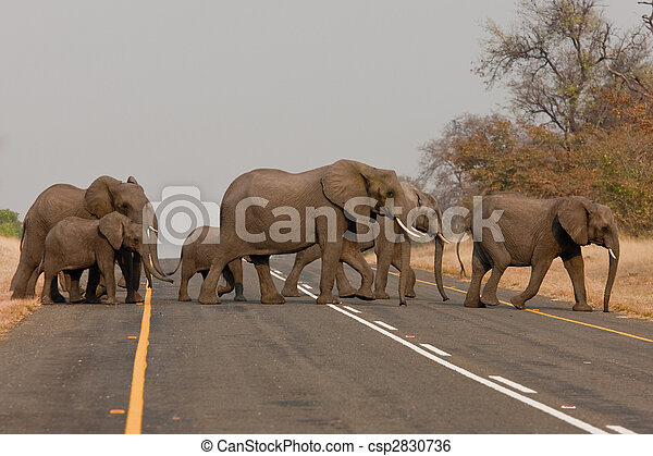 Group of wild elephants in southern Africa. - csp2830736