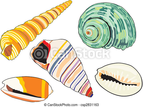 Vectors of sea-shells - art illustration of isolated different ...